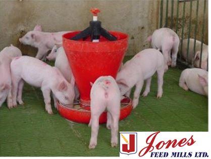 Swine | Jones Feed Mills Ltd